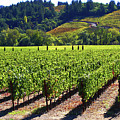 Vineyards In Sonoma County by Charlene Mitchell