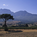 Vineyards Near The Helderberg Mountain by Stacy Gold
