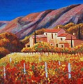 vineyards of Provence by Santo De Vita