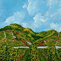 Vineyards Of The Wachau Valley by Mike Kraus
