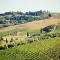 Vineyards With Stone House, Tuscany, Italy by Antonio Gravante