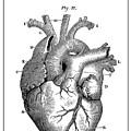 Vintage Anatomical Heart by Daniel Hagerman
