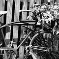 Vintage Bicycle  by Michelle Joseph-Long