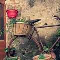 Vintage Bicycle Used As A Flower Pot, Provence by Dalibor Hanzal