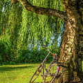 Vintage Bike Leaning On Tree by Alexandre Rotenberg