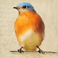 Vintage Bluebird by Jai Johnson