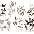Vintage Botanicals In Sepia Home Decor by Karla Beatty