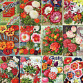 Vintage Childs Nursery Flower Seed Packets Mosaic  by Peggy Collins