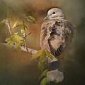 Vintage Dove by Vicki Stansbury