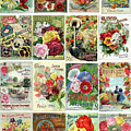 Vintage Flower Seed Packets 1 by Peggy Collins