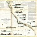 Vintage Map Of The U.s. West Coast - 1853 by CartographyAssociates