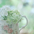 Vintage Pitcher by Bonnie Bruno