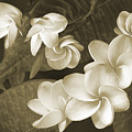 Vintage Plumeria by Ben and Raisa Gertsberg