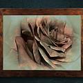 Vintage Rose On Old Wall 2 By Kaye Menner by Kaye Menner