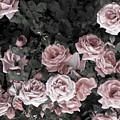 Vintage Roses In Pink 2  by Johnnie Stanfield