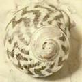 Vintage Seashell Still Life by Jorgo Photography - Wall Art Gallery