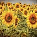 Vintage Sunflowers - Yellow Wall Art by Joann Vitali