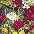 Vintage Tropical Flowers by Hawaiian Legacy Archive - Printscapes