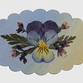 Viola Pressed Flower Arrangement by Em Witherspoon