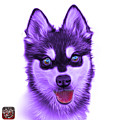 Violet Alaskan Klee Kai - 6029 -wb by James Ahn