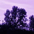 Violet And Black Trees  by Debra Lynch