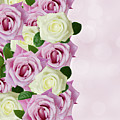 Violet  And White Roses by Anastasy Yarmolovich