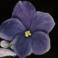 Violet by Carol Blackhurst