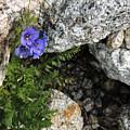 Violet Climbing  by Grant Bolei