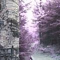 Violet Forest by Samiksa Art