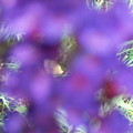 Violet Haze by Vijay Sharon Govender
