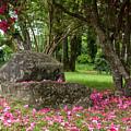 Violet Laplante City Park by Robert Potts