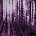 Violet Rays by Tina Meador