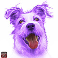 Violet Terrier Mix 2989 - Wb by James Ahn