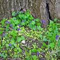 Violets by Beth Tidd