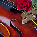 Violin And Red Rose by M K  Miller