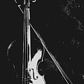Violin Bow Black And White by Steve Somerville