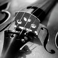 Violin by Danielle Donders - Mothership Photography