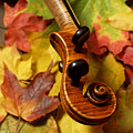 Violin Scroll With Fall Maple Leaves by Anna Lisa Yoder