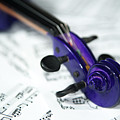 Violin Tuning Pegs II by Helen Northcott