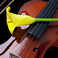 Violin With Yellow Calla Lily by Garry Gay