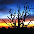 Virden Road Sunset by Brenda Purvis