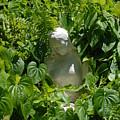 Virgin Mary by Rob Hans