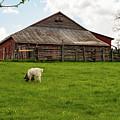 Virginia Farmyard by Bob Phillips