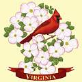 Virginia State Bird Cardinal And Flowering Dogwood by Crista Forest