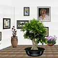 Virtual Exhibition -  Bonsai 13 by Pemaro