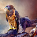 Vision Of The Hawk 2 by Carol Cavalaris