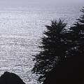 Vista - Julia Pfeiffer Burns State Park by Soli Deo Gloria Wilderness And Wildlife Photography