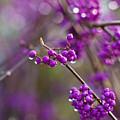 Vivid Beauty Berries by Mike Reid