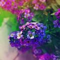 Vivid Purple by Devin Dixon