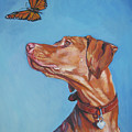 Vizsla And The Butterfly by Lee Ann Shepard
